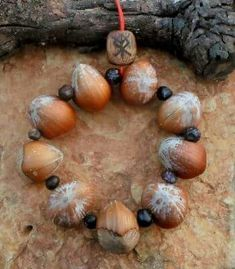 9 hazelnuts charm..hang on the door for blessings...