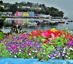Tobermory Flowers and Boats by James Bullis-King