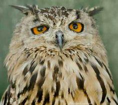 }{      .#owls