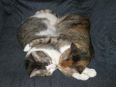 Cat kisses.