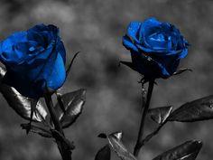 10 Images de Roses - Frawsy