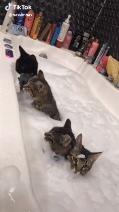 if you use this shitty app just for bathing cats, it can be acceptable Gato Animal, Cute Baby Animals, Cute Funny Animals, Cute Dogs, Animals And Pets, Funny Cats, Kittens Cutest, Cats And Kittens, Beautiful Cats
