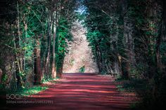 Another Red Path by SLAZT #nature #travel #traveling #vacation #visiting #trip #holiday #tourism #tourist #photooftheday #amazing #picoftheday