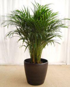 Las plantas de interior más comunes