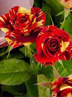 Encante-se com a vida em cada momento;           enfeite a alma de doce contentamento;                   abrace cada nova emoção;            deixe florescer em seu coração                     ternuras e esperanças,      que tragam futuras saudades e lembranças,               perfumando todo o caminho,     de amor e carinho que semeou delicadamente;               com sorrisos e terno encanto.                 (Claudia Salles)