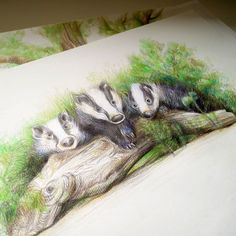 "Badgers, illustration from picture book ""Benzie, the big angry cat"""
