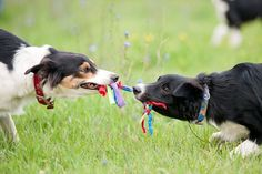 When to Intervene at the Dog Park #dogs