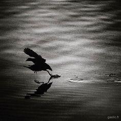 Happy birds day 3/3 Walking on water #today 2018 atelier sous reserve #anotherdayattheoffice #sameplace #differentday #atelierdartiste #welcome #inviteyourself #france #creteil #wanderlust #travelphotography #art