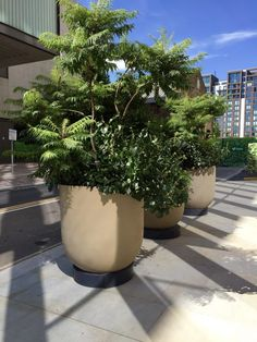 Atrium - Urbis Design - Contemporary Concrete Planters and Furniture