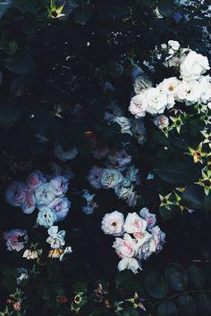 by Elizabeth Lazdina