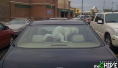 This is why you don't leave your dog in the car