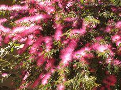 Rosalba Paisagismo .:. Landscape Architecture - Blog - As plantas dão boas-vindas