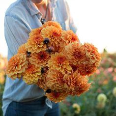 Dahlia David Howard by Floret Shop Seasonal Flowers, Fall Flowers, Orange Flowers, Cut Flowers, Brown Flowers, Dahlia Bouquet, Creative Flower Arrangements, Bloom Where Youre Planted, Cut Flower Garden