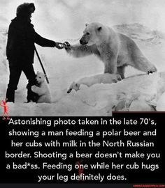 Animals And Pets, Baby Animals, Funny Animals, Cute Animals, Unusual Animals, Wtf Fun Facts, Faith In Humanity, Beautiful Creatures, Polar Bear