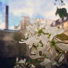 Moment de poésie et de calme au milieu de l'agitation de la ville ! Quelle beauté...