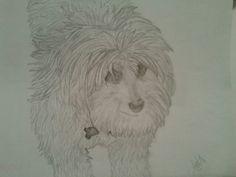 Maltipoo drawing.