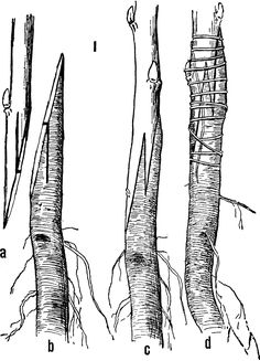 Grafting to roots/ orchards and fullsized trees/grafting to produce scion with own roots/ healthier, longer lived trees