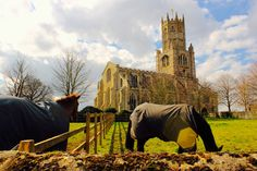 Fotheringhay - Horses