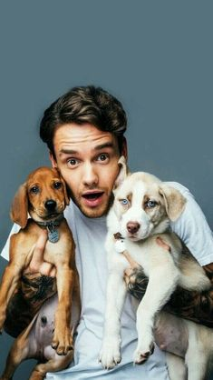 Liam Payne with puppies is the cutest thing ever Liam Payne, Liam 1d, One Direction Wallpaper, One Direction Pictures, Liam James, Niall Horan, Louis Tomlinson, Cutest Thing Ever, 1d And 5sos