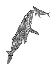 Humpback Whale Drawings - First Breath by Carol Lynne