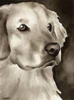 """Stunning """"Golden Retriever"""" Artwork For Sale on Fine Art Prints"""