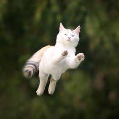 """atouchofwhiteandgreen:""""mausi.meow"""""""