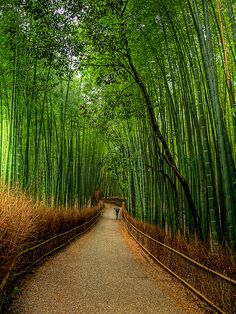 Bamboo trail - The bamboo forest in Sagano, Kyoto, Japan