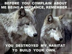 Discover and share Wolf Wisdom Quotes. Explore our collection of motivational and famous quotes by authors you know and love. Wolf Spirit, Spirit Animal, Humour Wtf, Beautiful Creatures, Animals Beautiful, Beautiful Things, Of Wolf And Man, Animals And Pets, Cute Animals