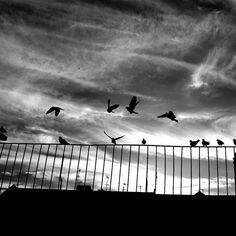 Il cielo...   jornalistasdeimagens Black & White young wild and free(; bnw_captures