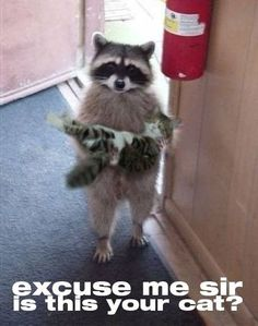 Excuse me sir is this your cat? Funny jokes and memes.