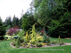MySecretGarden: Garden of the Conifer Collector. Part 1