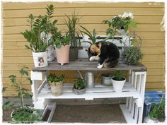 Valkoisen lumoissa: Istutuspöytä ja muita tuunauksia Wood Projects, Garden, Plants, Wedding, Balcony, Bench, Garden Cottage, Valentines Day Weddings, Garten