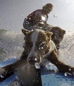 Chris de Aboitiz, un ancien champion de surf, s'est reconverti dans le dressage de chiens. Lui-même maître de quatre chiens, il n'hésite pas à emmener ses compagnons à quatre pattes à la plage... et sur la planche. Max, Murph, Millie et Rama sont des habitués du surf dans les vagues de Palm Beach, à Sydney. Deux par deux, les chiens montent sur la planche de leur maître, se positionnent devant et derrière lui pour des sessions drôles à voir.