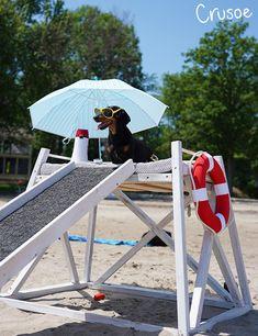 cute dachshund lifeguard