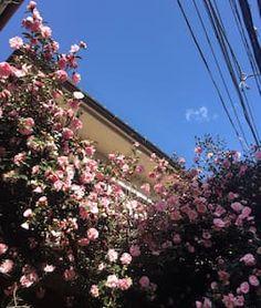 Airbnbで見つけた素敵な宿: 初めてのAirbnb★ゲストハウス女子に人気★新宿駅4分★プライベートルーム★グループにぴったり2 - 借りられる一軒家 - Nakano-ku
