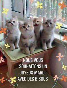 Bon Mardi, Cute Puppies, Emoji, Kittens, Messages, Funny, Animals, Friends, Sweet