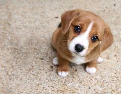 This is about cute little puppies that you may fall in love with! Cute Dogs And Puppies, Little Puppies, I Love Dogs, Doggies, Puppy Dog Eyes, Dog Cat, Pet Puppy, Cute Baby Animals, Funny Animals