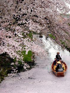 People enjoy cherry blossom cruise on April 4 2015 in Kawagoe Saitama Japan
