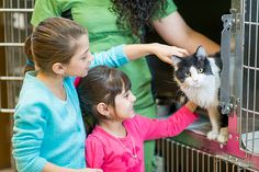 Adopting a Cat – From a Foster Home (in 2021)