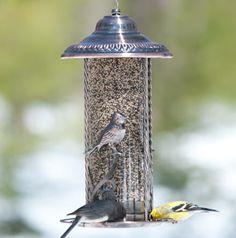 Ornamental songbird motif graces the exterior of this elegant feeder. Songbird Tres Belle Bird Feeder