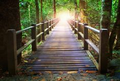 the journey of detoxing from drugs Deep Forest, Royalty Free Pictures, Depth Of Field, Wood Bridge, Nature Pictures, Image Now, Perspective, Canvas Prints, Stock Photos