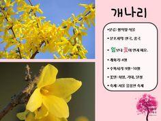 봄 활동자료 봄에 피는 꽃 PPT : 네이버 블로그 Korea, Korean