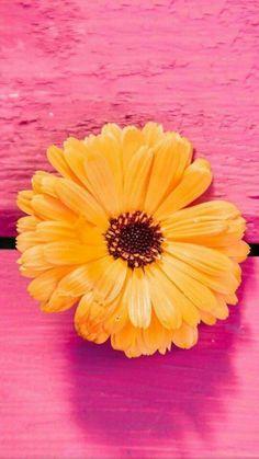 Flowers Orange Wallpaper Backgrounds Ideas For 2019 Galaxy S8 Wallpaper, 2017 Wallpaper, Wallpaper Images Hd, Cellphone Wallpaper, Nature Wallpaper, Mobile Wallpaper, Cute Wallpapers, Wallpaper Backgrounds, Iphone Wallpaper