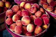 Read about Spraying Peach Trees in this Stark Bro's Growing Guide article. Cultivate ideas and grow your knowledge. Pink Fruit, Eat Fruit, Fruit Trees For Sale, Dwarf Trees, Fresh Eats, Trees Online, Peach Trees, Stone Fruit, In The Flesh