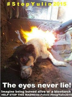 Imagine being burned alive w/ a blow torch #CHINA #StopYulin2015 STOP YULIN DOG MEAT FESTIVAL https://www.change.org/p/president-of-the-people-s-republic-of-china-stop-the-yulin-dog-meat-eating-festival …