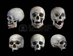 Skull of the person on a black background