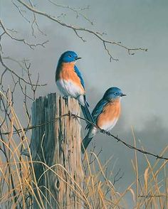 """Bluebird Pair""  painting by Jim Hautman:                              …"