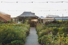 Having dinner at Stedsans, a rooftop farm restaurant in Copenhagen,  is an adventure from the very beginning.