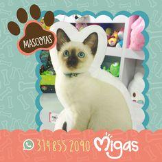 Encuentra en Migas estos hermosos peluditos, visítanos en nuestros puntos de venta y llévatelos al mejor precio #FábricadeSueños #Migas #Mascotas #Pets Migas ¡Tu tienda de regalos favorita!