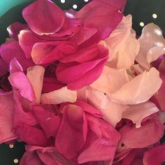 Rose Oxymel